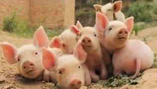 猪腹泻的治疗方法是什么