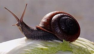 龟吃蜗牛注意事项