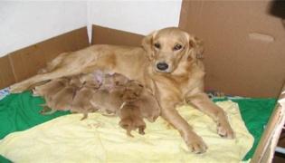 小狗狗瘟的治疗方法