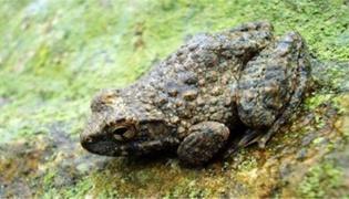 石蛙连皮吃还是剥皮吃