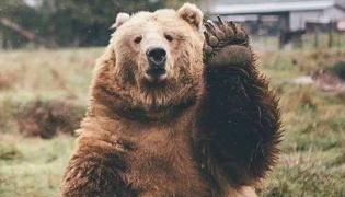 熊属于什么科的动物