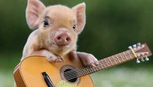 宠物猪真的不会长的吗