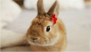 兔子能不能吃西瓜皮