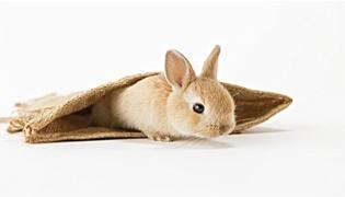 兔子站不起来还有救吗