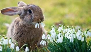 兔子有传染病吗
