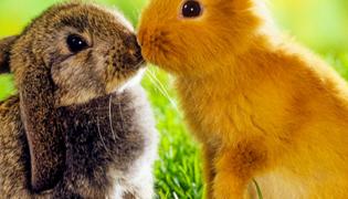 如何养兔子