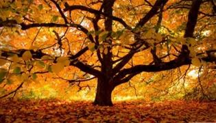 有哪些秋天的句子