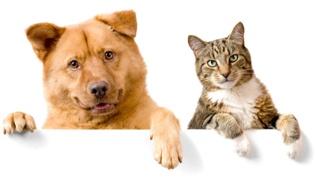 怎么给宠物猫办理猫证