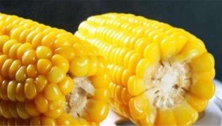 玉米不熟能吃吗