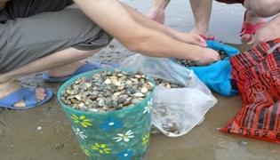 海边挖花蛤技巧