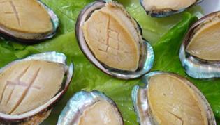 鲍鱼是不是贝壳类