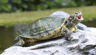 乌龟多长时间喂食一次