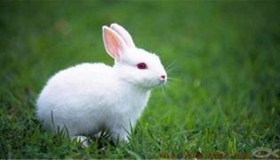 怎么给兔子降温