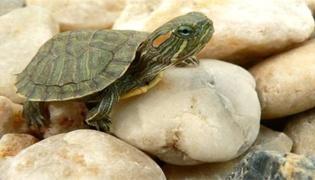 养乌龟一般是不是每天都得换水