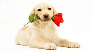 狗眼睛长息肉能恢复吗
