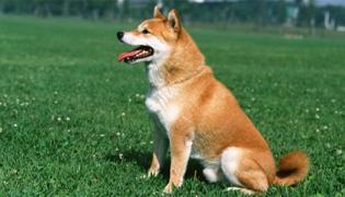 狗测排卵有什么简易的方法