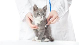 猫血常规和生化有什么区别