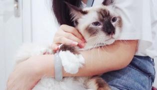 猫舔了碘伏会有什么后果
