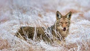 土狼和鬣狗的区别是什么