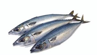 沙丁鱼有没有刺