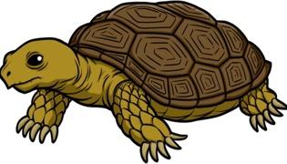 乌龟在什么季节脱皮