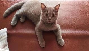 猫心丝虫症状有哪些