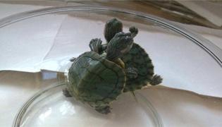 乌龟是用玻璃缸养还是用塑料缸养
