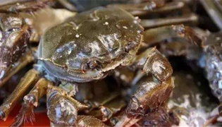 活螃蟹怎么快遞
