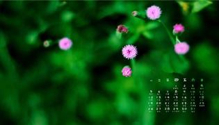 怎样将日历显示在屏幕