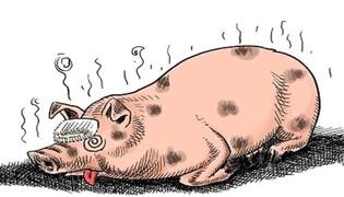 非洲猪瘟的发病规律