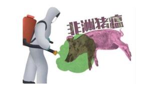 高温可以杀死非洲猪瘟病毒吗