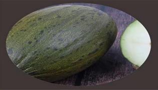 黑金蜜瓜属于什么品种