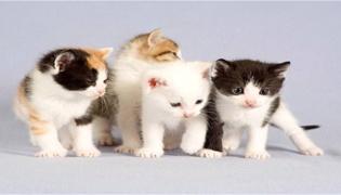 小猫打妙三多有什么副作用