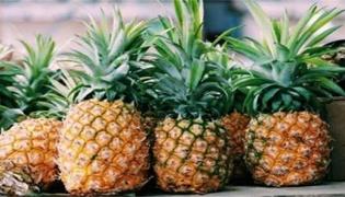 烂菠萝能吃吗