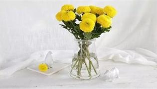 乒乓菊的养殖方法和注意事项是什么