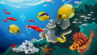 毛骨鱼和剑骨鱼的区别是什么