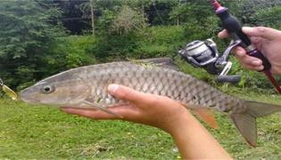 钓回来的鱼怎么养才不会死