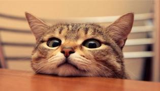 什么人不能养猫