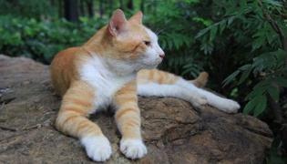 猫腿脱臼和骨折怎么区分
