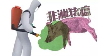 非洲猪瘟是通过什么传播的