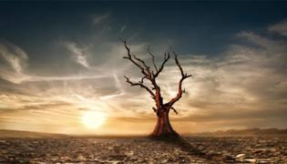 有什么让大树快速枯死的绝招