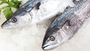 馬鮫魚的處理方法是什么