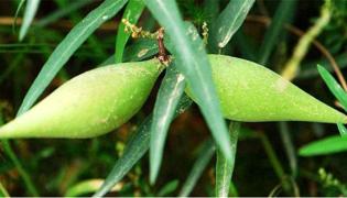 蒿瓜怎么做比較好吃