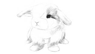 兔子眼睛怎样画