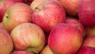 苹果上面的根叫什么