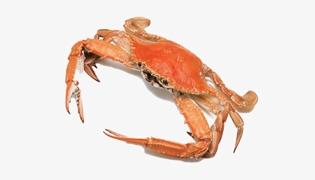 海红蟹和梭子蟹的区别有什么