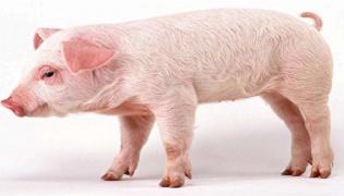 猪周期下行的意思是什么