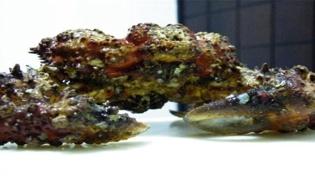 石头蟹和石蟹区别有哪些