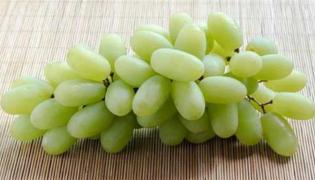 无核白和马奶葡萄区别