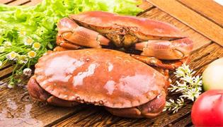 黄道蟹和面包蟹的区别是什么